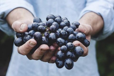 хороший урожай винограда