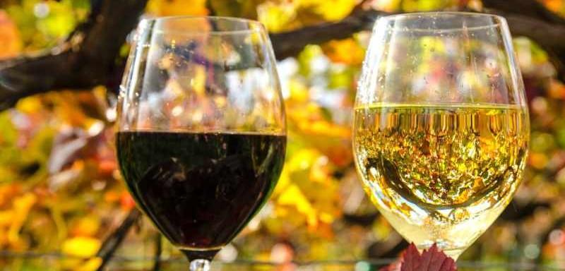 белое и красное вино3