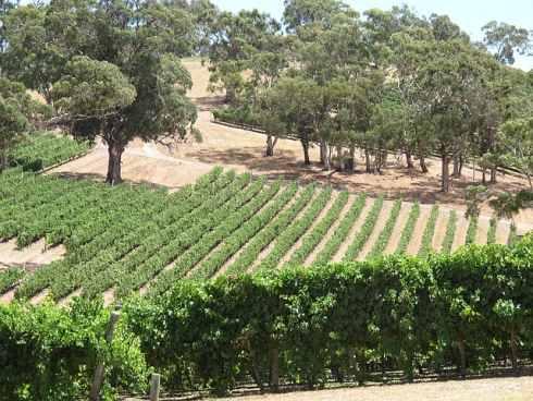Австралийский виноградник Лонгвью